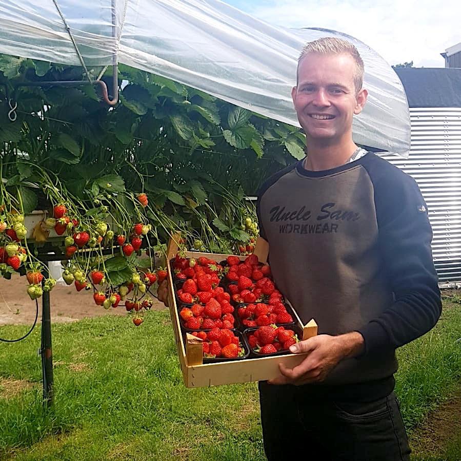 Aardbeien van Kroeze uit Beesd, nu ook via Puur Betuws