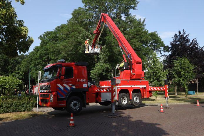 Brandweer schiet te hulp bij schade door onweersbuien. Afgebroken tak blijft bovenin boom hangen in Nijnsel.