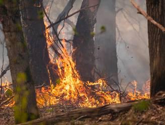 Afgelopen 25 jaar al 10-tallen hectare Brechts natuurgebied in rook opgegaan, ook door schietoefeningen