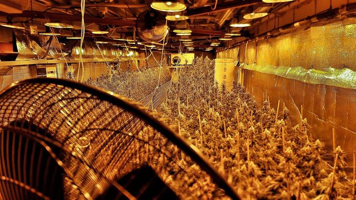 Criminelen - vaak betrokken bij hennepkwekerijen - hebben hun tentakels diep in de Brabantse samenleving zitten.