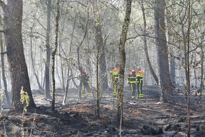 Grote bosbrand in Moergestel.