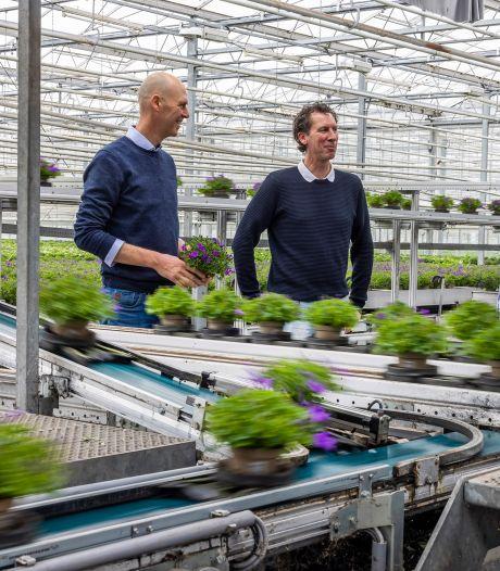 Grootste Nederlandse campanulakweker is 100 jaar: derde generatie regeert over eigenwijs familiebedrijf