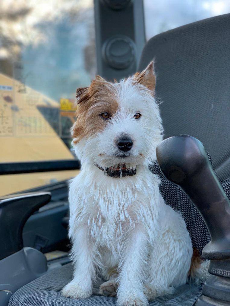 Dribbel - hondje doodgestoken door jogger Beeld rv