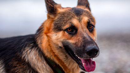 Wetenschappelijk bewezen: DNA bepaalt unieke karaktereigenschap van hondenras