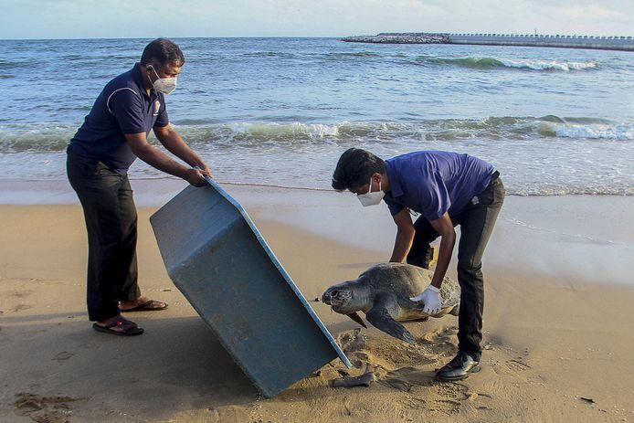 Milieuambtenaren met het karkas van een dode schildpad, aangespoeld na de scheepsramp voor de kust van Sri Lanka.