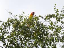 1 papegaai, 3 brandweerwagens en 1 Apeldoornse boom: 'Mees wil helemaal niet gered worden'