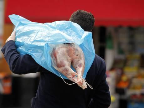 'Geredde' schapen uit illegaal slachthuis misschien alsnog onverdoofd geslacht