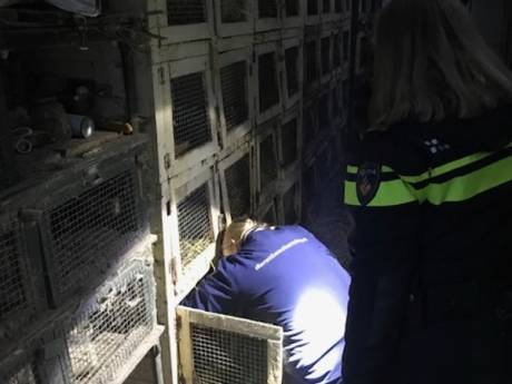 Opnieuw klachten over Edese konijnenfokker: 'Ze leefden op vijf centimeter stront'