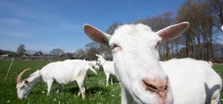 Nieuw innovatiecentrum voor geiten in Holten