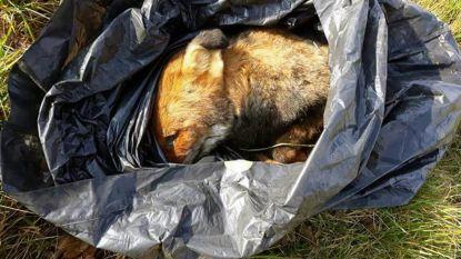 Derde dode vos in maand tijd