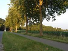 Bomen Koningstraat komende jaren vervangen