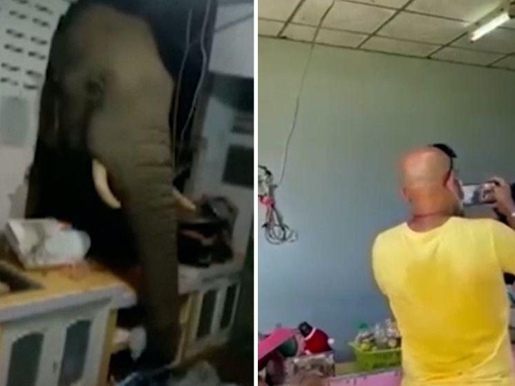 Olifant breekt door keukenmuur op zoek naar eten