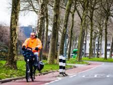 Verbazing over kap Dordtse platanen na opduiken 'geheim rapport'
