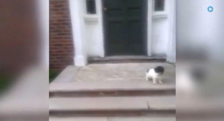 bosjes-hond.png