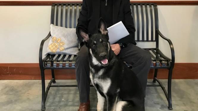 Bidens hond Major terug in Witte Huis na bijttraining