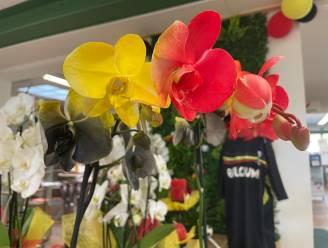 """Tuincentrum verkoopt 'tricolore-orchideeën': """"Nederlandse klanten vragen al naar bloemen in de kleuren rood-wit-blauw"""""""