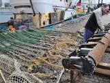 Natuurorganisaties: 'Wetenschap moet leidend zijn bij besluit pulsvisserij'