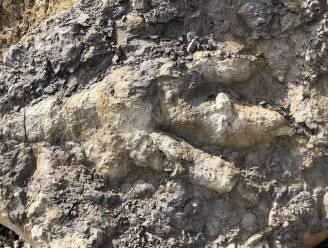 """Archeologe ontdekt """"grootste voetafdruk van dinosaurus in Yorkshire ooit"""""""