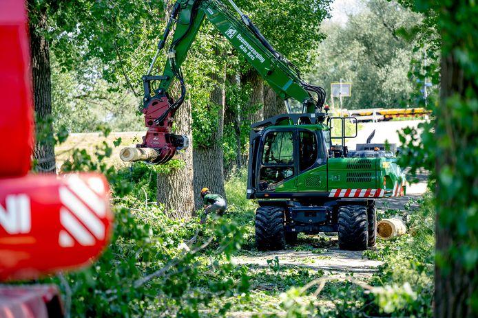 Er wordt maandag al hard gewerkt om 26 bomen aan de Distelakkerstraat te rooien. De weg is daardoor de hele week nog deels afgesloten.