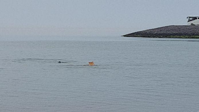 Bij de Brouwersdam speelde gisteravond een hond met een zeehond