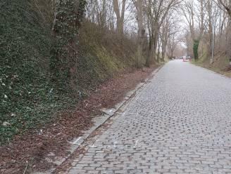 Wortels van lindebomen aan Kauterhof worden onderzocht