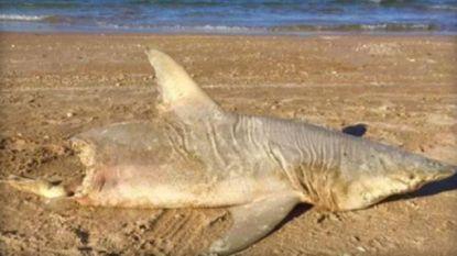 Het onopgeloste mysterie van de half opgegeten haai op strand van Florida
