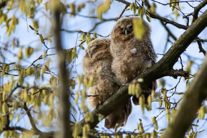 Heel wat amateurfotografen probeerden al leuke kiekjes te maken. Onder meer vogelkenner Wim Steelandt uit Nieuwenhove wist al enkele foto's te nemen.