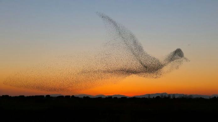 Fotograaf schiet unieke foto van zwerm spreeuwen