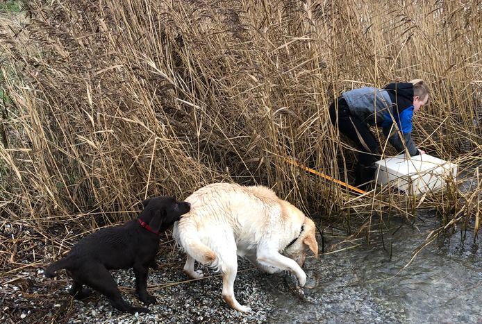 De negenjarige Stijn de Viet haalt een gestolen kluis uit het water bij Deurloo's Kaaitje op Tholen. De honden Guus en Tommie houden een oogje in het zeil.
