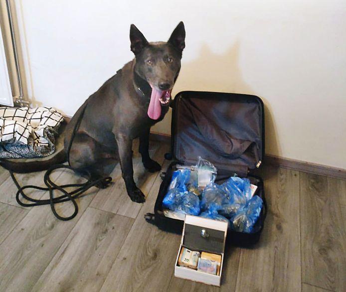 Drugshond Racko leverde goed werk tijdens de huiszoeking.