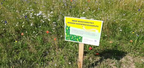 Hardenberg schoffelt ecologisch maaibeleid niet neer: 'minder meldingen'