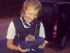 Ook dit is politiewerk: baby-egel gered van tussen tramsporen
