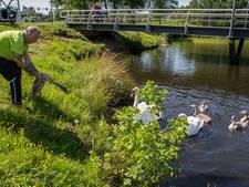 Brandweer brengt drie jonge zwanen terug bij ouders in Oosterhout