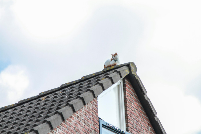 Een dak ter illustratie