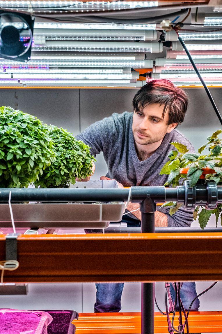 Olivier Paulus van Urban Harvest in Anderlecht: 'Onze rekken zijn maximaal 3 meter hoog, zodat we geen robots nodig hebben.' Beeld Tim Dirven