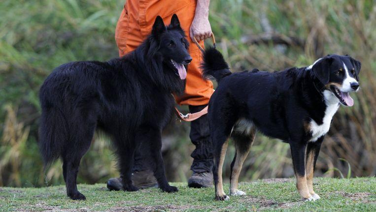 Twee van de honden die zoeken naar de vermiste studentes. Beeld reuters