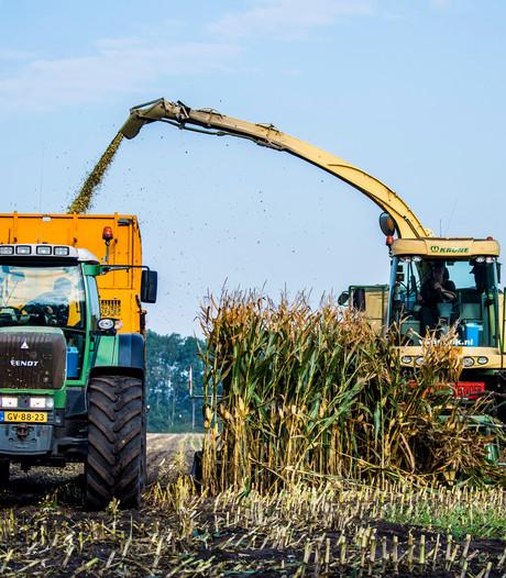 Topjaar voor de mais, ook bij Van Bavel in Riel vijftig ton per hectare