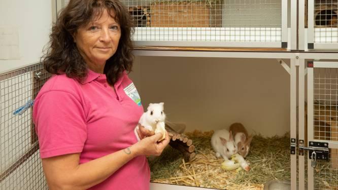 Van spijtkonijnen tot coronahonden, dieren massaal teruggebracht naar asiel: 'Telefoon gaat non-stop'