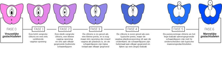 Als artsen bepalen hoe vermannelijkt meisjesgeslachtsdelen zijn, dan gebruiken ze daarvoor de Prader-schaal. Deze schaal loopt van typisch vrouwelijk (0) via allerlei interseksvariaties naar typisch mannelijk (6). Beeld