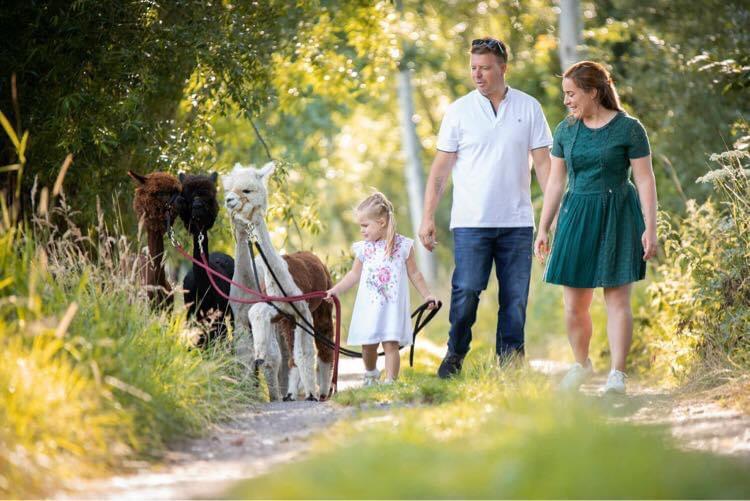 Wandelen met alpaca's kan nu ook in Assebroek.