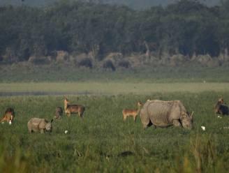 WWF wil drones inzetten om dieren te beschermen