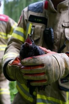 Brandweer bevrijdt vogel uit boom na intensieve reddingsoperatie