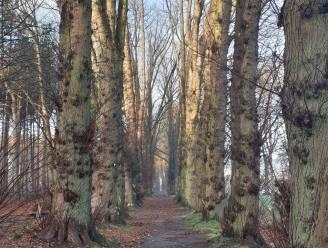 """Kapwerken in Park Redemptoristen worden bijgestuurd: """"Begrip voor de onrust, maar de werken zijn echt wel nodig voor het bos"""""""