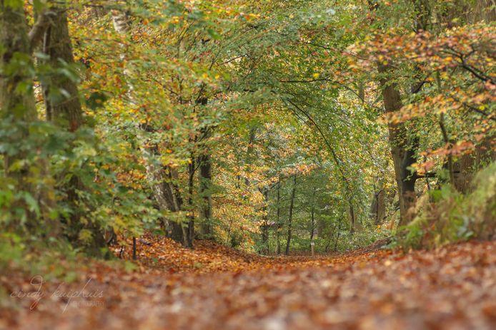 Natuurgebied het Springendal in de gemeente Dinkelland.