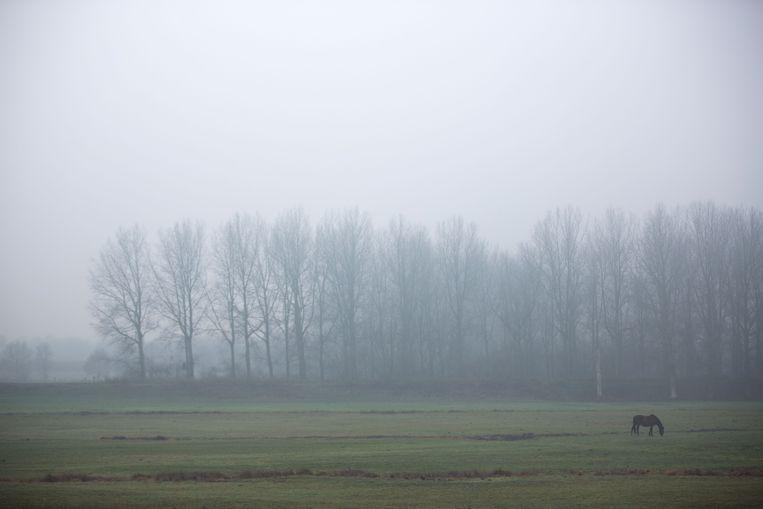 Mist in Limburg  Schulen