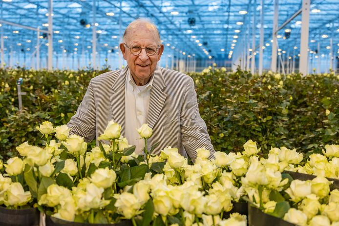 Oud-rozenkweker en voormalig veilingvoorzitter Marius Varekamp tussen de rozen in de kas van SK Roses in De Lier.