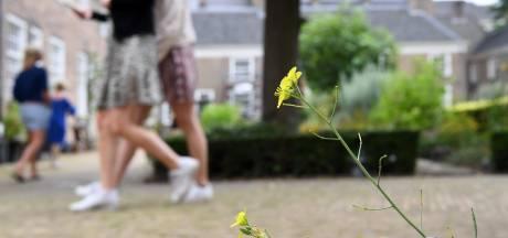 'Stadsflora van de Lage Landen' laat natuurlijke schoonheid in de binnenstad van Breda zien