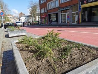 Parkeerstrook in Basiliekstraat verdwijnt en daar heeft stad Halle twee redenen voor