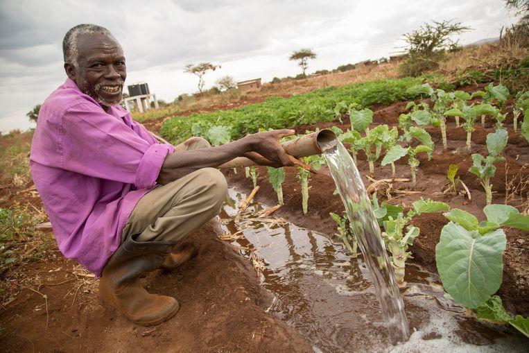 Een Keniaanse boer irrigeert zijn planten. Beeld Alamy