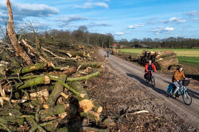 Beeld van de bomenkap langs de laan richting de Boschhoeve.